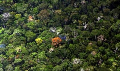 2 热带雨林林冠层的化学多样性