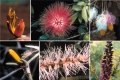豆科植物花朵