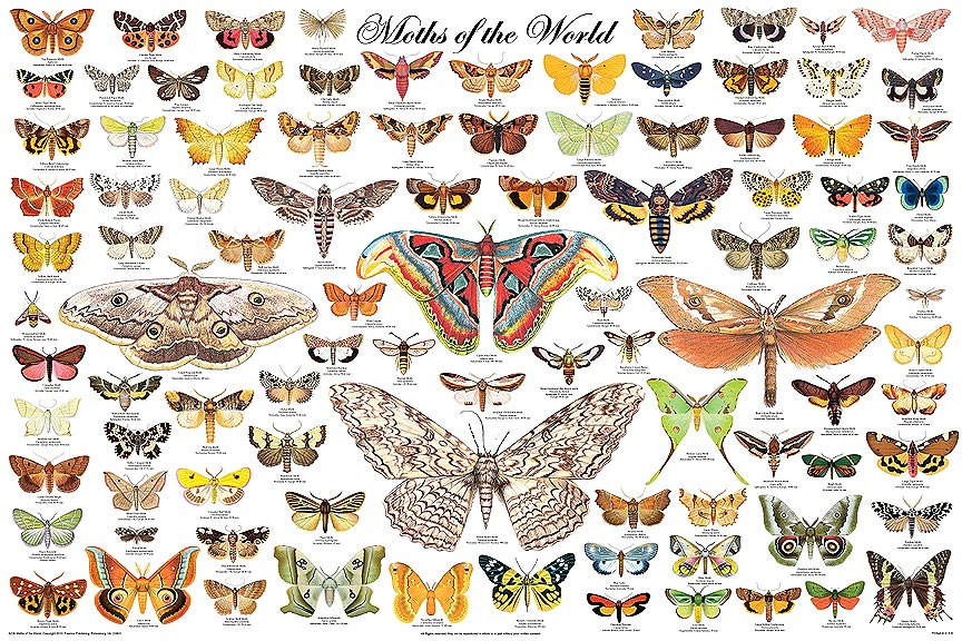 5086-001-Moths-of-the-World-poster
